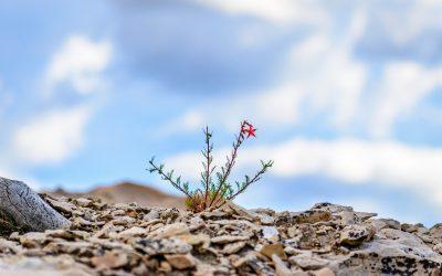 Resilienzstärkung oder Stressresistenz?
