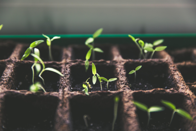 Selbstwert will wachsen und gehegt werden wie ein zartes Pflänzchen.