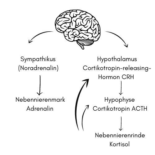 Was passiert im Körper bei Stress?