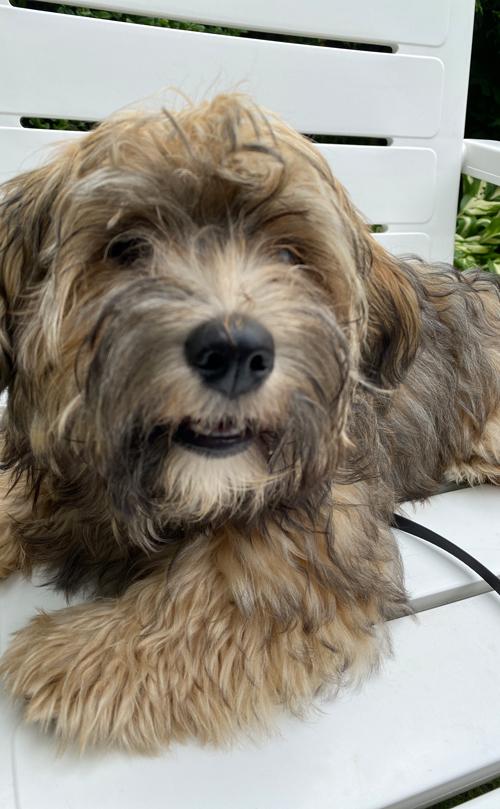 Milton, mein zukünftiger Therapiehund