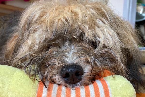 Tiergestützte Therapietechniken helfen zB, mehr Achtsamkeit für den Moment zu entwickeln.